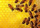 یک مشت زنبور/ عکس