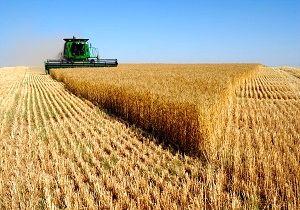 قیمت خرید گندم دولت از کشاورزان اعلام شد
