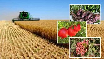 سرانه مصرف میوه ایران ۲ برابر کشورهای توسعه یافته