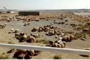 فرود اضطراری هواپیمای باری در فرودگاه امام خمینی(ره)