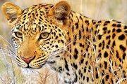 آخرین وضعیت لایحه منع حیوان آزاری