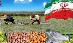 توزیع بیش از 156 هزار تن محصولات کشاورزی و دامی در گیلان