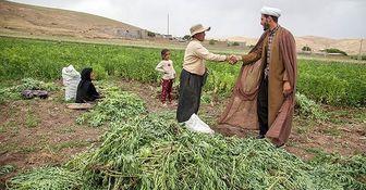 سود، جریمه و کارمزد وام کشاورزان خسارتدیده بخشیده شد