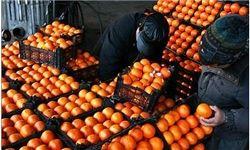 کمبودی در عرضه پرتقال وجود ندارد