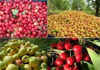 بازار میوه پایتخت در دست ۴ هزار دلال