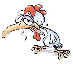 آنفلوآنزای مرغی در چند قدمی ایران