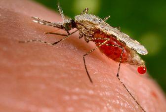 مرگ روزی۱۲۰۰کودک بر اثر مالاریا دردنیا