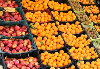 توزیع ۷۰ هزار تن سیب و پرتقال شب عید از امروز با ۱۰ تا ۲۰درصد تخفیف
