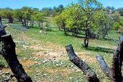 حمله خشکسالی زودرس به جنگلهای بلوط