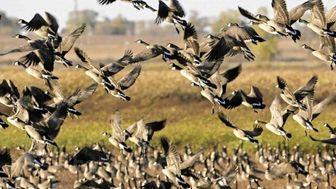 تعطیلی مراکز نگهداری حیات وحش تهران در پی مشاهده آنفلوآنزای پرندگان در قم