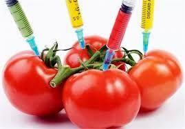 محصولات تراریخته حتی برای خوراک دام هم مناسب نیست
