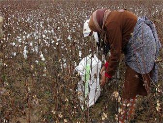 زنان روستایی، بازوی قدرتمند توسعه روستایی