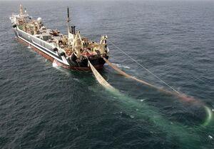 چد فروند کشتی صید ترال در بندرعباس توقیف شد