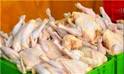 تکذیب خبر آلودگی مرغهای موجود در تهران