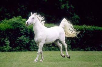 عاشقانههای ۲ اسب / عکس