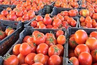 بارش باران گوجه فرنگی را گران کرد!