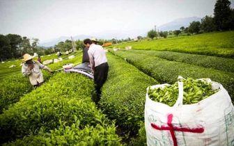 صادرات محصولات کشاورزی راهی برای بی نیازی از درآمدهای نفتی